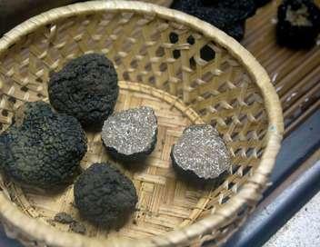 Xenius Les truffes : des trésors culinaires enfouis sous nos pieds