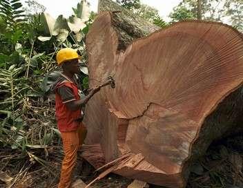 À la reconquête des forêts