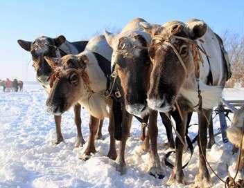 Les derniers nomades Sibérie, le dernier voyage Arctique