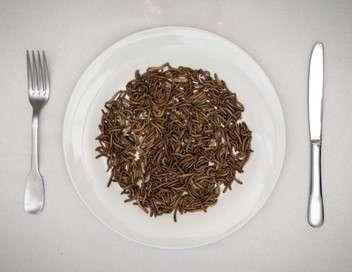 Des insectes dans l'assiette