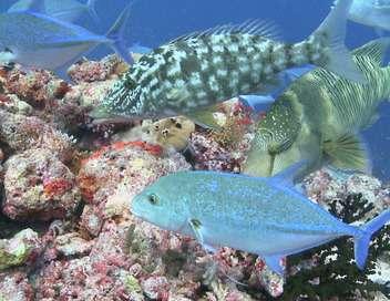 Le triangle de corail
