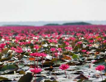 Thaïlande, la beauté sauvage
