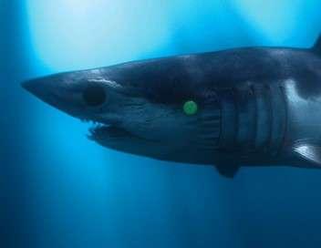 L'empire des requins