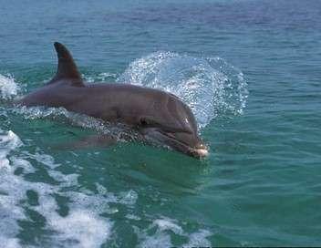 Mes amis les grands dauphins