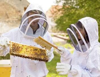 Xenius Le miel, de la ruche au pot