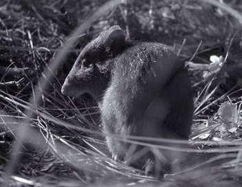 Marsupiaux en danger