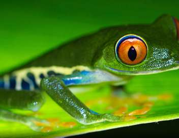 Costa Rica, une arche de la nature