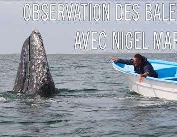 Observation des baleines avec Nigel Marven