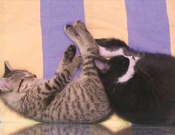 SOS Chats en détresse