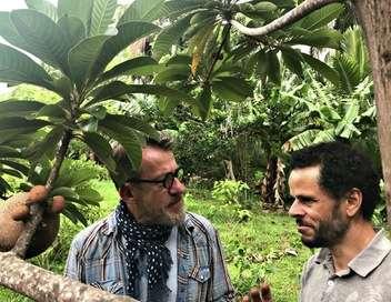 Comme une envie de jardins... Les trésors de La Réunion