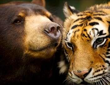 Complicité animale