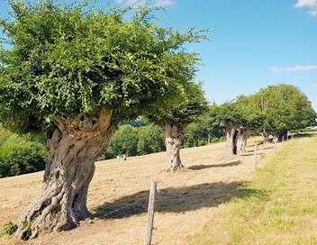 Trognes, les arbres aux mille visages