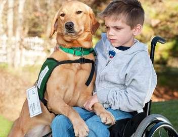 Un chien pour la vie