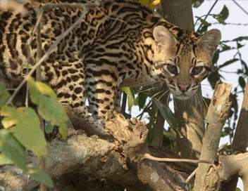 Brésil : Terre de Richesses Le Pantanal : réserve mondiale de biosphère