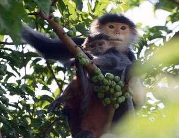 La biodiversité du bassin du Mekong