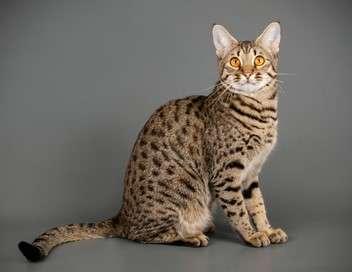 Le big bêtisier 100% chat